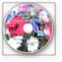 Parenting DVD